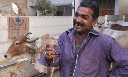 Giải khát bằng... nước tiểu bò ở Ấn Độ