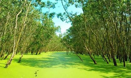 Rừng tràm Trà Sư, tấm thảm xanh dịu mát miền Tây