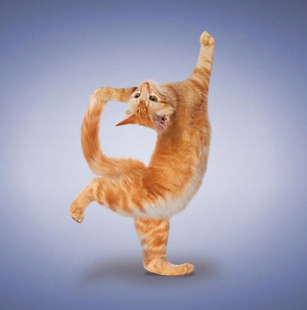 mèo bị sụt cân