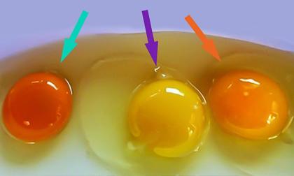 Cách nhận biết trứng gà tốt
