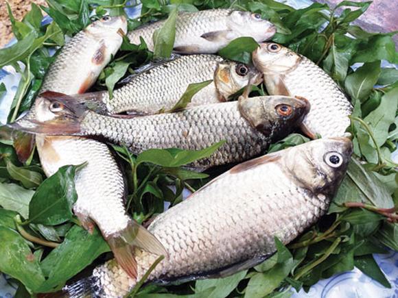 rau củ, cá, thực phẩm, ung thư