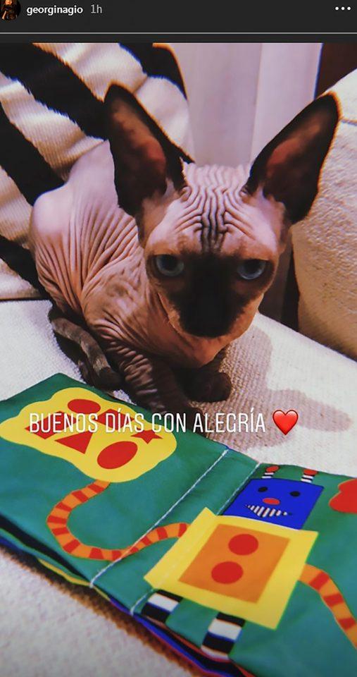 Ronaldo, mèo Sphynx, Georgina Rodriguez