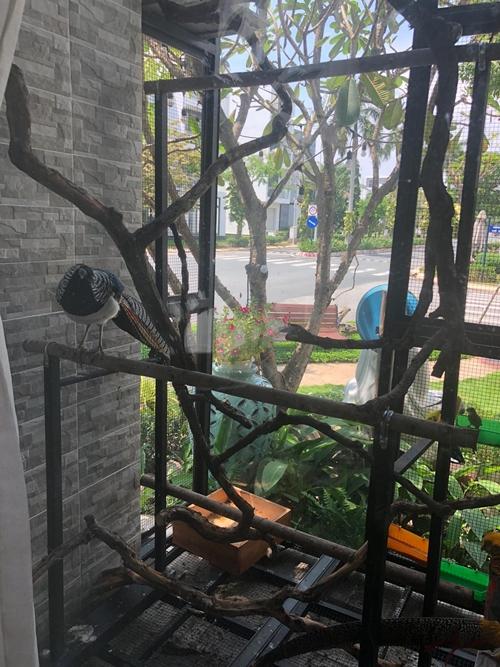 Quách Thành Danh,vườn rau của Quách Thành Danh,sao Việt
