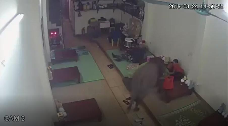 Hà Nội: một con trâu bất ngờ 'đột nhập' lúc cả nhà đang ngủ, giương sừng nhằm thẳng bé trai để húc