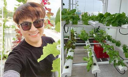 Vườn rau thủy canh ngập tràn thực phẩm sạch của nhà MC Đại Nghĩa