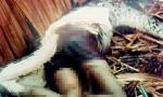 Kinh hoàng trăn khổng lồ nuốt chửng bé gái lớp 8