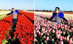 Tùng Dương 'điệu' giữa rừng hoa tulip