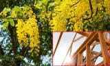 7 loại cây linh thiêng mang lại may mắn cho gia chủ khi động thổ khởi công