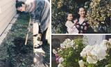 Ngắm khu vườn đầy cây trái, hoa thơm của Kim Hiền trên đất Mỹ