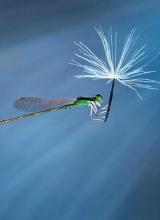 Thế giới côn trùng đẹp như trong thần thoại