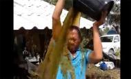 'Bucket Challenge' phiên bản phân bò