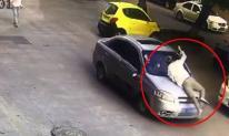 Bắt gặp vợ đi cùng nhân tình, chồng nhảy lên ô tô đánh ghen náo loạn cả đường phố