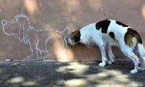 Hài hước những bức ảnh chụp chó trùng hợp ngẫu nhiên