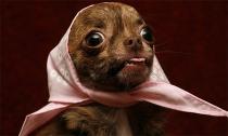 'Siêu mẫu' cún, nhìn là mê!