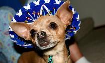 Chùm ảnh: Cún xinh cún có quyền... tỏa sáng!