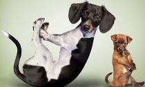 Ngắm bộ ảnh chó và mèo tập Yoga cực dễ thương