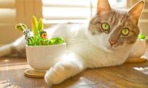 Những chú mèo lười đáng yêu nhất hành tinh