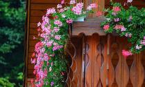 Hoa cảnh dễ trồng đang lên ngôi