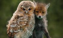 Ngắm ảnh hiếm 'tình bạn' thân thiết của động vật