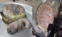 4 con rùa hình dáng kỳ lạ từng gây xôn xao dư luận