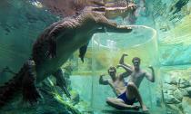 Thử cảm giác thót tim cùng cá sấu khổng lồ