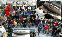 Cá ngừ vây xanh quý hiếm 135kg trôi dạt vào bờ biển Anh