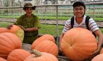 Củ quả kích thước 'khủng' ở Việt Nam
