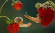 Ngắm thế giới ốc sên đẹp nên thơ như trong thần thoại