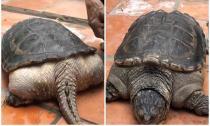 Những loài sinh vật kỳ lạ được phát hiện ở Việt Nam