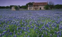 Chiêm ngưỡng 10 vườn hoa đẹp nhất thế giới