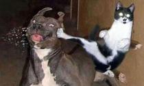 Cười 'chảy nước mắt' với chùm ảnh vui nhộn của động vật