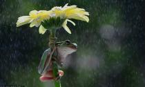 Khoảnh khắc ếch dùng hoa làm ô che mưa tuyệt đẹp