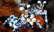 Hình ảnh tuyệt đẹp của những động vật dưới biển