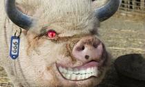 'Chết cười' với những hình ảnh động vật bị photoshop (P10)