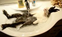 Khoảnh khắc 'ướt nhẹp' đầy hài hước của động vật