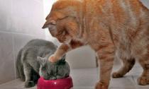 'Chết cười' với những hình ảnh hài hước của loài mèo (P 2)