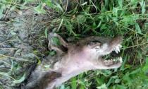 Phát hiện xác chết của sinh vật lạ có vẻ ngoài giống quỷ