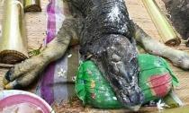 Phát hiện quái vật có mõm cá sấu, hình dáng giống trâu