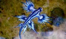 Phát hiện sinh vật kỳ lạ phát sáng xanh trên bãi biển