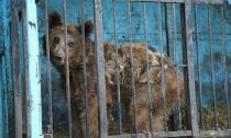 Cuộc sống đầy ám ảnh bên trong vườn thú tồi tệ nhất Thế giới