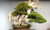 Những mẫu bonsai đẹp ngất ngây khiến bạn không thể rời mắt