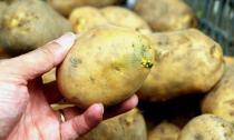 Loại rau quả có thể gây tử vong nếu ăn sai cách