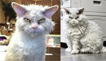 Chú mèo gây sốt mạng xã hội vì có khuôn mặt 'khó đỡ'