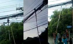 Bắt trăn khổng lồ trên... dây điện