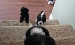 Những chú cún con tập 'vượt chướng ngại vật' cực đáng yêu