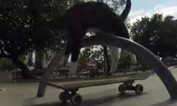 Mèo trượt ván như vận động viên chuyên nghiệp