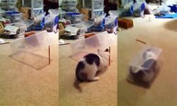 Bẫy mèo