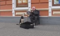 Chó 'song ca' cùng nghệ sĩ đường phố