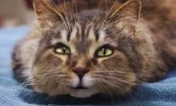 Những chú mèo 'biết nói'