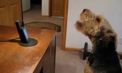 Khi cún trả lời điện thoại